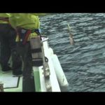 紀北町引本浦の船アオリイカ(2014年11月1日放送)