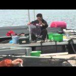 紀北町引本浦の筏チヌ(2014年6月14日放送分)
