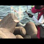 津市雲出の波止の五目釣り(2015年8月22日放送)