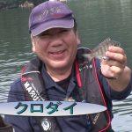 南伊勢町内瀬の筏チヌ大会(2017年10月28日放送)