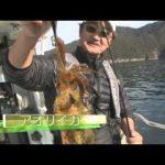 紀北町引本浦のボートエギング(2015年1月24日放送)