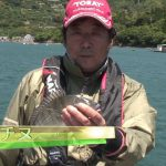 南伊勢町内瀬の筏チヌ(2016年6月25日放送)