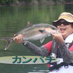 南伊勢町内瀬の釣堀(2018年7月28日放送)