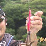 紀北町引本浦の船のエギング(2018年8月18日放送)