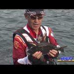尾鷲市の磯グレ後編(2020年8月29日放送)